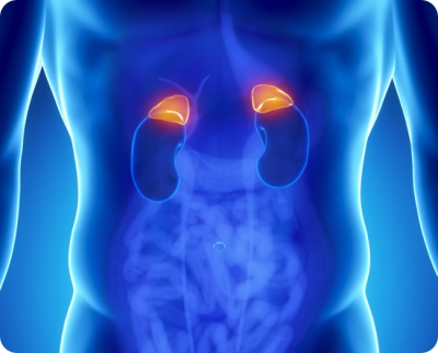 Диагностика рака надпочечника